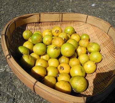 Yellow-strawberry-guava02.jpg